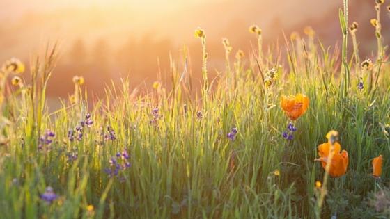 3 Key Elements to Healing Chronic Illness